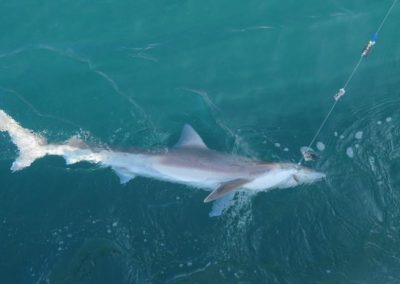 Shark Fishing Poole